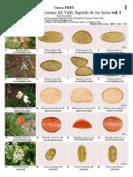 1023 Peru Pollen of Valle Sagrado de Los Incas Vol. i