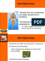 Basics on Vertebrates