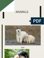 Animals.pptx