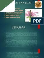 Partes de Una Flor (1)