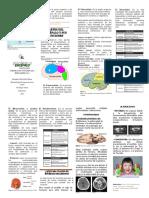 Folleto-Del-Encefalo intenet.pdf