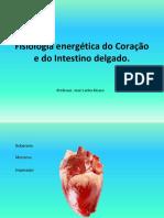 FE 4 - Coração e Intestino Delgado T. 26 A 07.07.2018.pptx