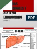 Sesion 11 Visceras Abdominales y Sistema Endrocrino 20181