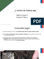 Manejo y Control de Dalaca Spp 2