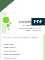 7 Pelajes e identificación del caballo.pdf