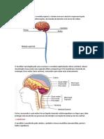 Neuro - SNC