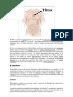 El Timo Es Un Órgano Linfoide Primario y Especializado Del Sistema Inmunológico