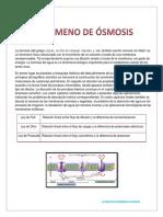 Osmosis termi