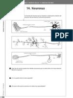 6. Sistema nervioso y endocrino.3º ESO