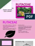 rutacea
