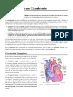 Anatomía_Aparato_Circulatorio