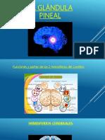 Presentacion Glandula Pineal