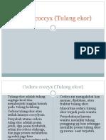 Cedera Coccyx (Tulang Ekor)
