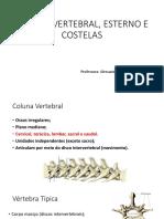 slides coluna vertebral, costelas e esterno.pdf