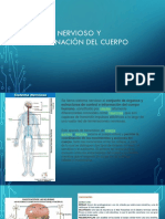 Sistema Nervioso y Coordinación Del Cuerpo