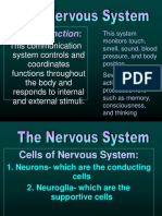 Endocrine_and_Nervous_R (1).pptx