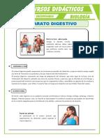 El Aparato Digestivo Para Tercero de Secundaria