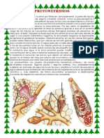 Protonefridios