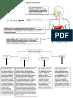 digesion y absorcion de minerales.pptx