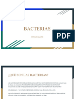 Equipo 2 Bacterias