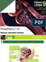 Sistema reprodutor (1).pdf