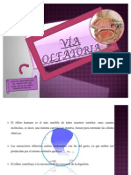 via-olfatoria-1225174728651703-9