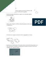 Resumen de Hongos - Microbiologia