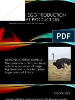 Ostrich Egg Production and Meat Production (Poultry 2 and Aquaculture)