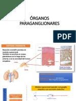 ÓRGANOS PARAGANGLIONARES