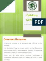Clase 3 - Células y Genotipo