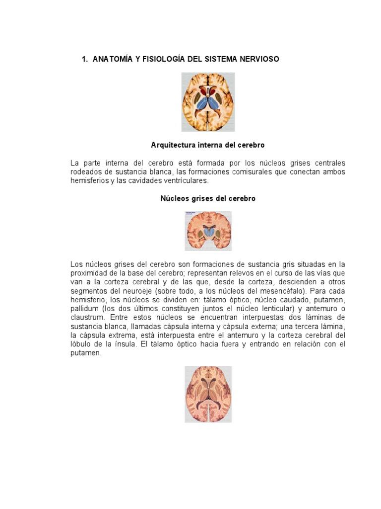 ANATOMÍA Y FISIOLOGÍA DEL SISTEMA NERVIOSO - INFORMATICA