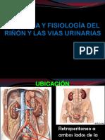 22 anatomia e histologia renal.pptx