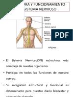 Pta 2 Estructura Del Encéfalo p (1)