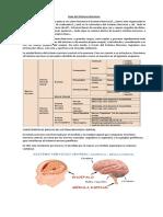 Guía Del Sistema Nervioso