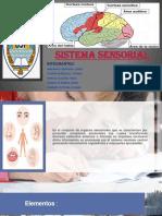 Anatomia Sistema Sensorial