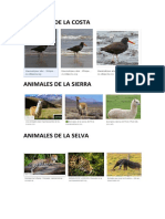 Animales Del Peruuuuu