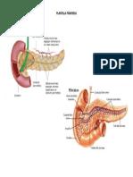 Páncreas
