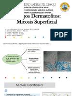Hongos Dermatofitos Micosis Superficial (1)