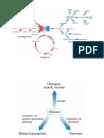 Riepilogo Metabolismo