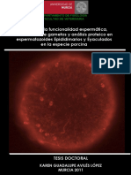 TESIS_DOCTORAL_KAREN_G._AVILÉS_LÓPEZ_prot.pdf