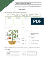 Ficha de Consolidação_E.M._3.º ano_Animais e Plantas