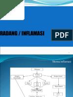 1-inflamasi1