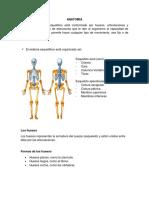 seminario musculoesqueletico