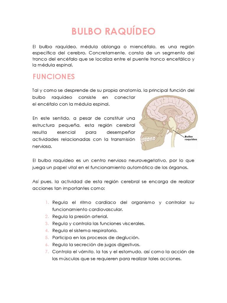 Bulbo Raquídeo Cerebro Anatomía Humana