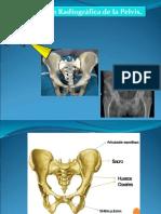 Pelvis Traumatologia1