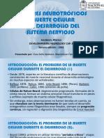 Expo. Muerte Neuronal y Factores Neurotróficos.