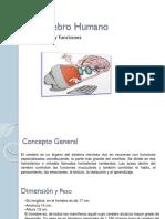 59441704-El-Cerebro-Humano.pptx