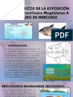 TOXICOLOGIA DE LOS PECES BOCACHICO