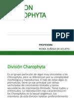 Division Charophyta