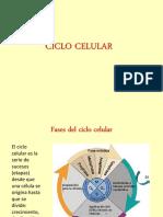 Ciclo Celular PTT (1)